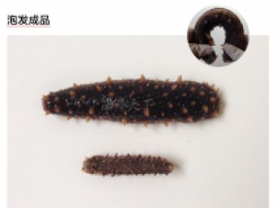 海参天下最畅销的三种野生海参的对比