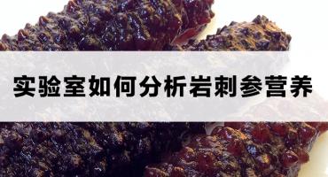 实验室如何分析海参营养?大西洋岩刺参VS中国刺参,有数据。
