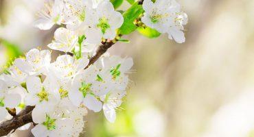 吃春正当时|四月里和海参最搭的新鲜食材