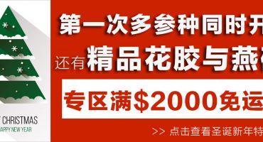 圣诞超级团购|第一次多种爆款海参同时开团,满$2000再免运费,还有花胶与燕碎!