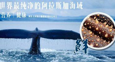 海参的大小和营养有关系吗?